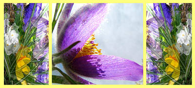Pasque Flower Digital Art - Crocus Pansies And Pasque by Gretchen Wrede
