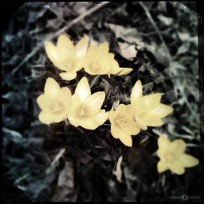 Photograph - Crocus by Tim Nyberg