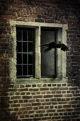 Photograph - Croe Flying Out Of  Window by Ethiriel  Photography