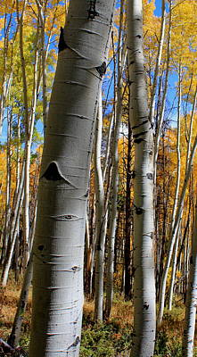 Photograph - Crooked Aspen by Trent Mallett