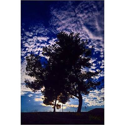 Politicians Wall Art - Photograph - #crooked. #politician. #tree. #nature by Kenneth Thompson