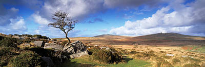 Crooked Tree At Feather Tor, Staple Print by Panoramic Images
