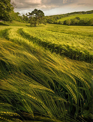 Photograph - Green Green Field by Mal Bray