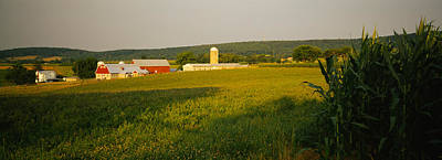 Crop In A Field, Frederick County Art Print by Panoramic Images