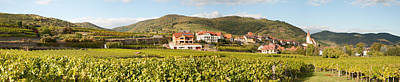 Vineyard Photograph - Crop In A Vineyard, Weissenkirchen by Panoramic Images