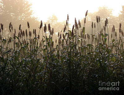Crops In Fog Art Print by Olivier Le Queinec