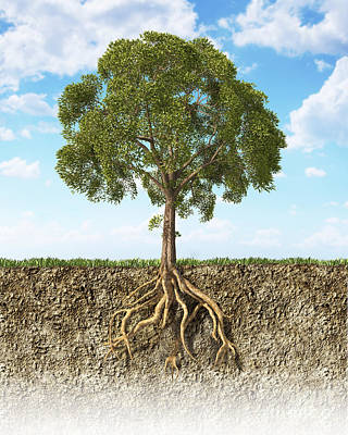 Grass Roots Digital Art - Cross Section Of Soil Showing A Tree by Leonello Calvetti