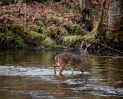Photograph - Crossing Abrams Creek by TnBackroadsPhotos