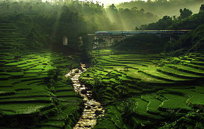 Rice Photograph - Crossing The Beautiful Bridge by Ismail Raja Sulbar