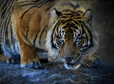 Photograph - Crouching Tiger 2 by Steve McKinzie