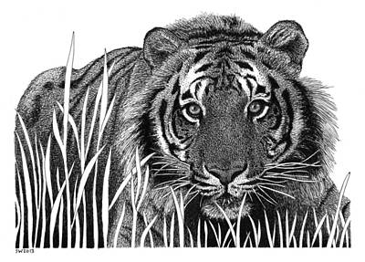 Drawing - Crouching Tiger by Scott Woyak
