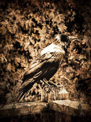 Photograph - Crow 002 by Lance Vaughn