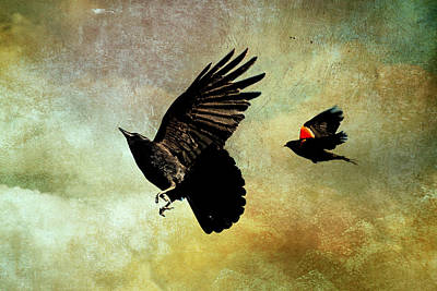 Crow In Flight Digital Art - Crow And Red-winged Blackbird by Peggy Collins