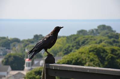 Photograph - Crow by Brett Geyer