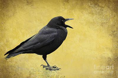 Photograph - Crow - D009393-a by Daniel Dempster