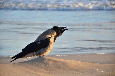 Photograph - Crow by Gynt