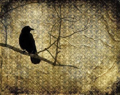 Crow In Damask Art Print