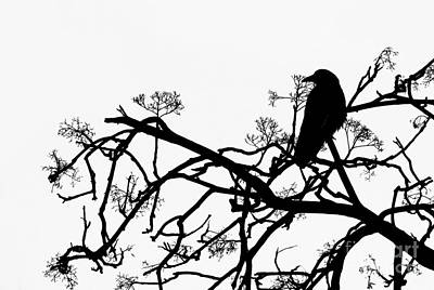 Filigree Photograph - Crow by Jasna Buncic