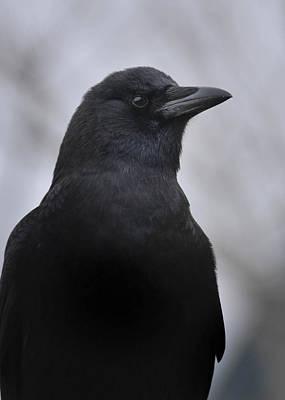 Photograph - Crow -mother Of Winter by Rae Ann  M Garrett