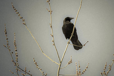 Mixed Media - Crow On Branch by Connie Dye