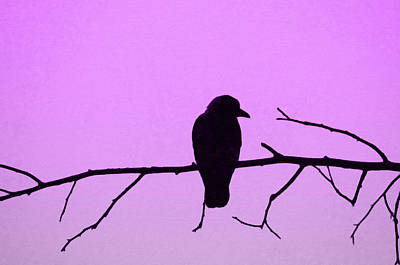 Crow On Branch Art Print