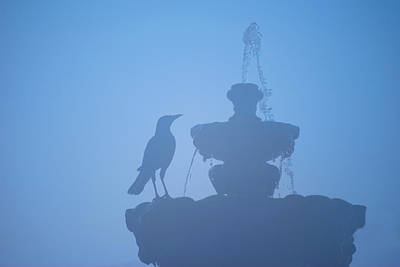 Photograph - Crow On Fountain by Larah McElroy