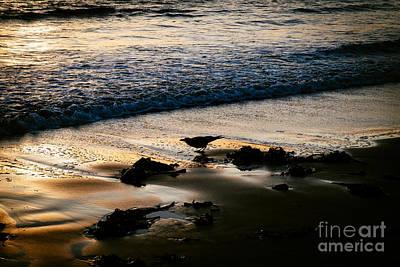 Photograph - Crow On The Beach by Dean Harte