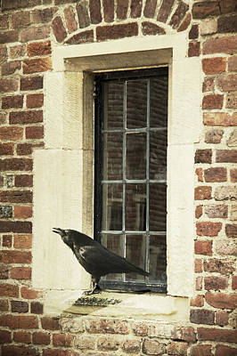 Photograph - Crow On Window Sill by Ethiriel  Photography
