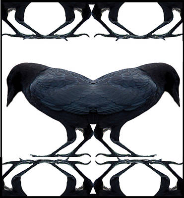 Lady Who Loves Birds Photograph - Crow Rorschach by Alexandra  Sanders