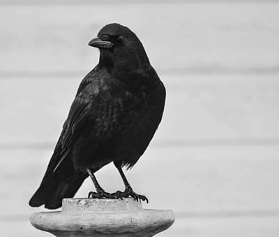 Photograph - Crow Sculpted by Rae Ann  M Garrett