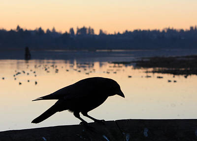 Photograph - Crow Silhouette by Gerry Bates