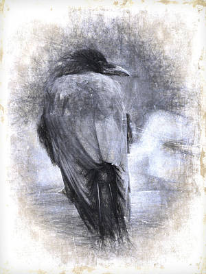 Black Birds Photograph - Crow Sketch Painterly Effect by Carol Leigh