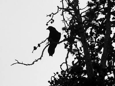 Photograph - Crow by Tarey Potter