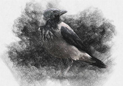 Surrealism Drawings Royalty Free Images - Crow Royalty-Free Image by Zapista OU