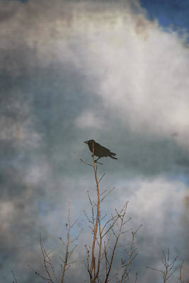 Photograph - Crow Tree by Steve Ball
