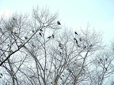 Crow Trees Art Print