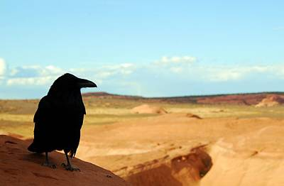 Photograph - Crow With Desert Backdrop by Cascade Colors