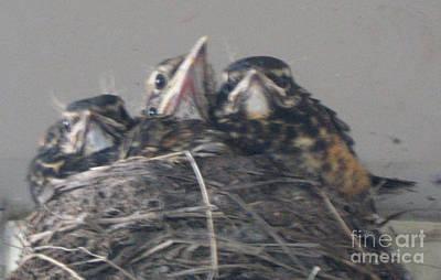 Crowded Nest Art Print