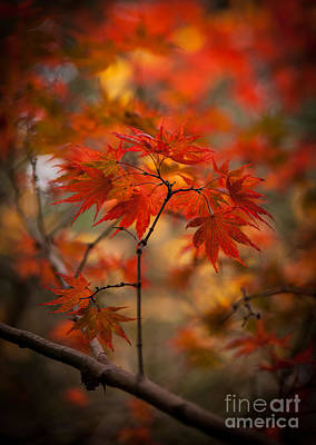 Red Leaves Photograph - Crown Of Fire by Mike Reid