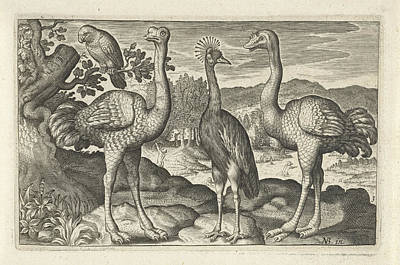 Ostrich Drawing - Crowned Crane Between Two Ostriches, Anonymous by Artokoloro