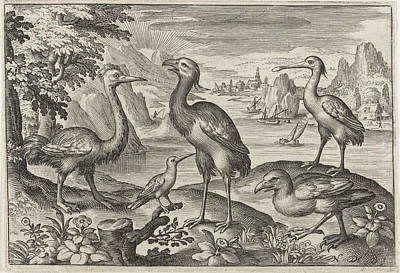 Ostrich Drawing - Crowned Crane Between Two Ostriches, Nicolaes De Bruyn by Nicolaes De Bruyn