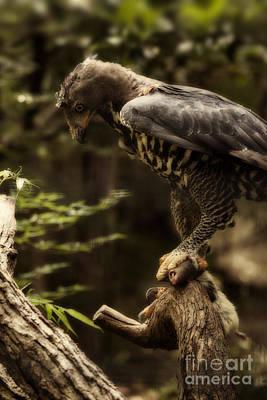 Eagle Photograph - Crowned Eagle V3 by Douglas Barnard