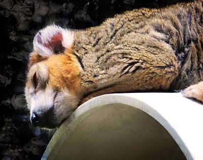 Photograph - Crowned Lemur by Shawna Rowe