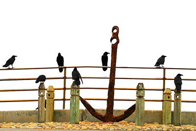 Crows At Anchor Art Print by John King