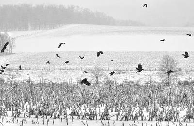 Photograph - Crows In Cornfield Winter by Dan Friend