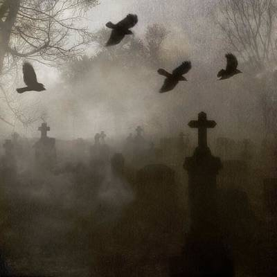 Crows On A Eerie Night Art Print