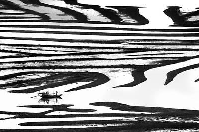Cruising On A Zebra Art Print