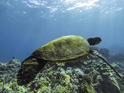 Photograph - Cruising The Reef by Brad Scott
