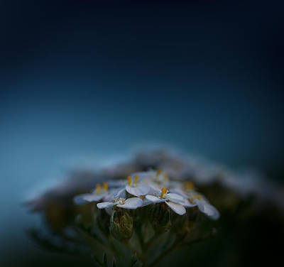 Blue Flowers Photograph - Crushed By The Weight Of Blue by Shane Holsclaw