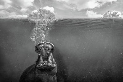 Hippopotamus Wall Art - Photograph - Cry Freedom by Peter Poppe